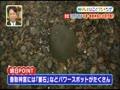 速報!有吉の明日したいことランキング 無料動画~2012年12月6日